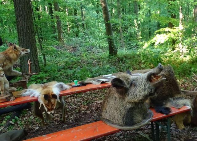 Rund um Wild und Jagd